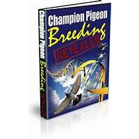 Champion pigeon breeding revealed promotional code