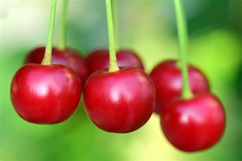 Cherries Calories Watermelon Wallpaper Rainbow Find Free HD for Desktop [freshlhys.tk]