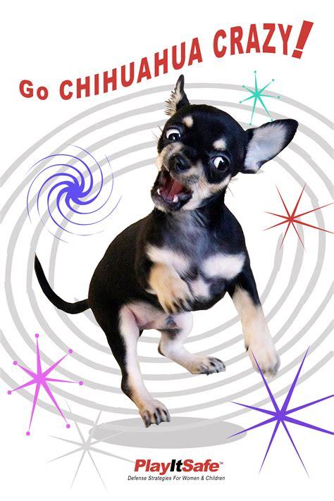 Chihuahua Crazy Self Defense