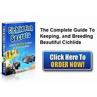 Cichlid fish secrets discount