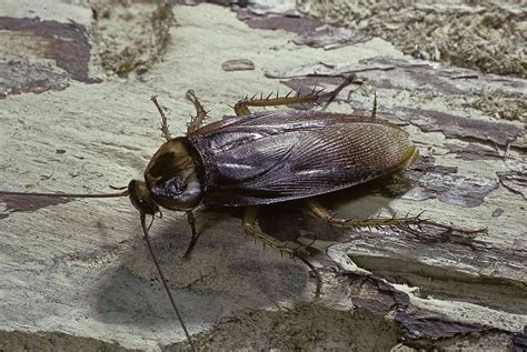 Cockroaches In Garage Make Your Own Beautiful  HD Wallpapers, Images Over 1000+ [ralydesign.ml]