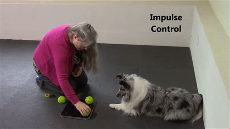 cognitive games for dogs