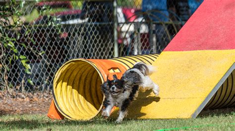 cool critters dog training valrico fl.aspx Image