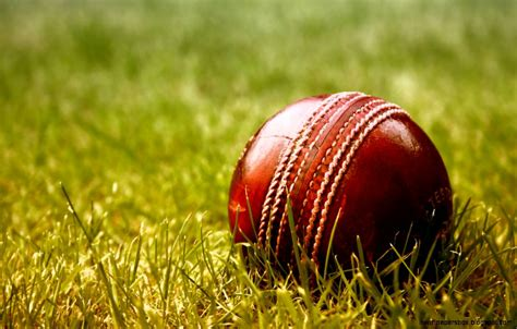Cricket Wallpapers HD Wallpapers Download Free Images Wallpaper [1000image.com]