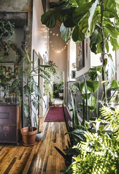 Decorating Home With Plants Home Decorators Catalog Best Ideas of Home Decor and Design [homedecoratorscatalog.us]