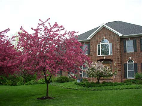 Decorative Trees For Home Home Decorators Catalog Best Ideas of Home Decor and Design [homedecoratorscatalog.us]