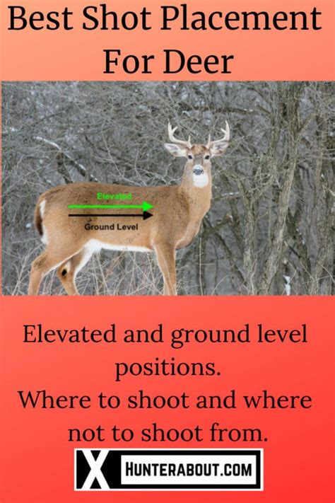 Deer Hunting Rifle Shot Placement