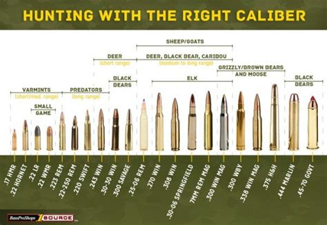 Deer Hunting Rifle Sizes