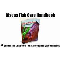 Discus fish care handbook comparison