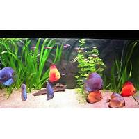 Discus made easy tips