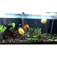 Discus made easy scam?