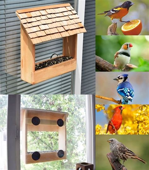Diy window bird feeder Image