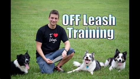 do you want your dog to stay with you off leash Image