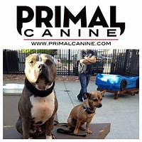 Do it yourself complete dog training program upgraded is bullshit?