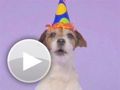 dog barking happy birthday song Image