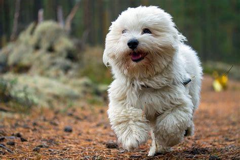 Dog Breeds For Apartments Math Wallpaper Golden Find Free HD for Desktop [pastnedes.tk]