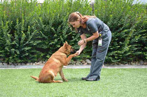 dog obedience training ri.aspx Image