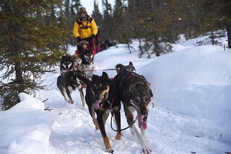 dog sledding training uk.aspx Image