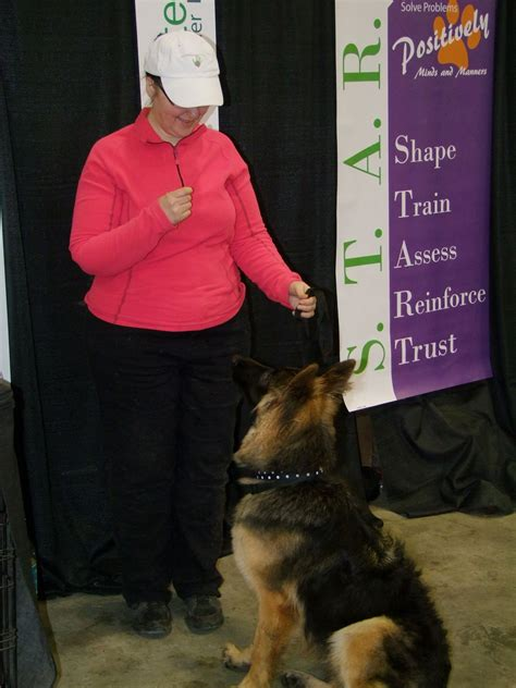 dog training aylmer quebec Image
