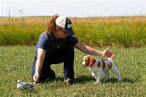 dog training bayo.aspx Image
