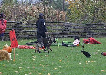 dog training brampton Image