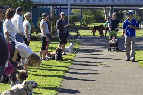 dog training brisbane northside Image