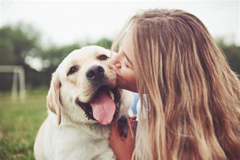 dog training evanston il Image
