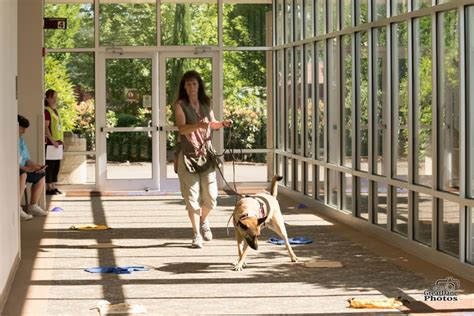 dog training everett wa Image