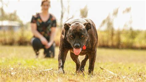 dog training palmerston nt.aspx Image