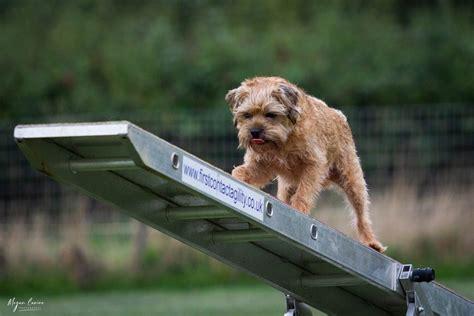 dog training sherborne Image