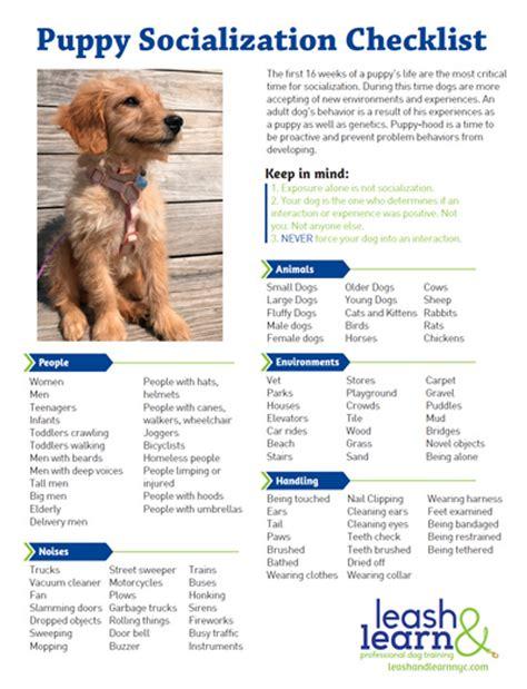 dog training socialization.aspx Image