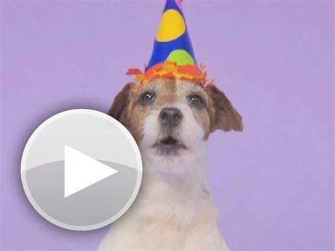 ?dog barking happy birthday song