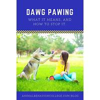 Dog behaviour training manual free trial