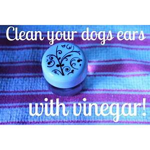 Buying dog food reviews shocking dog food ingredients exposed