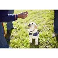Dogploma dog obedience training online secrets