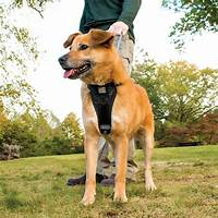 Dove cresswells dog training online programs