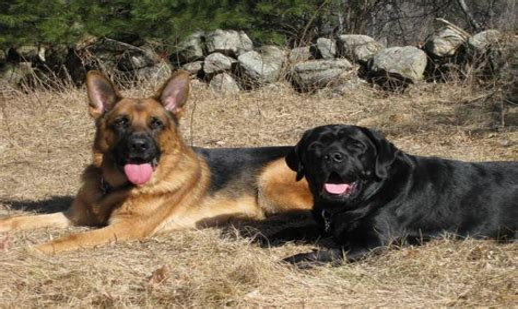 dylan akc agility trial fast novice leg 3 Image