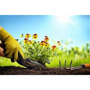 Easy guide to successful herb gardening step by step