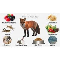 Eat to perform reviews