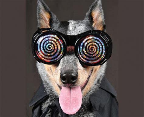 Emg Hypnosis Dog