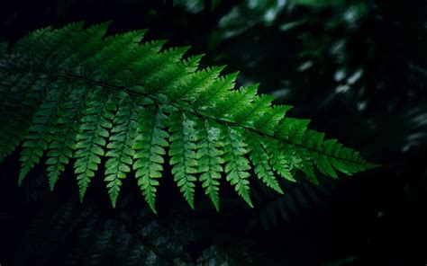 Fern Wallpaper HD Wallpapers Download Free Images Wallpaper [1000image.com]