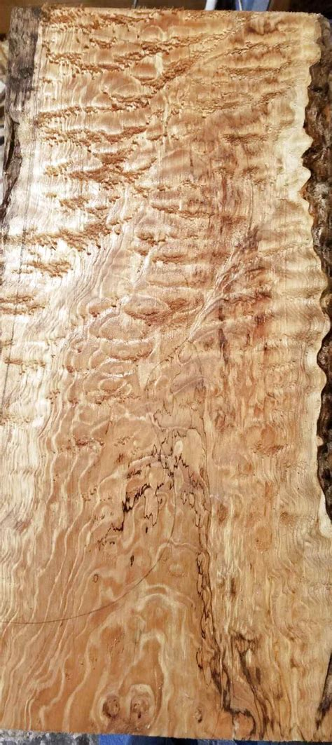 Figured maple for sale Image