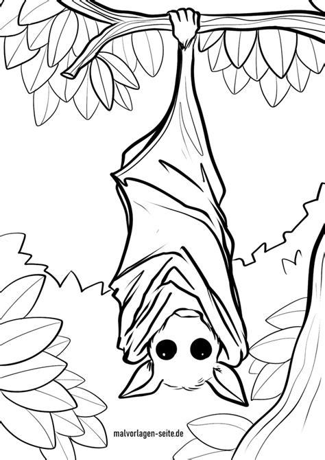 Fledermaus Malvorlage Pdf