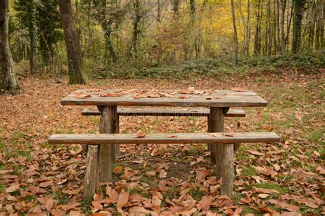 Forest Service Picnic Table Plans