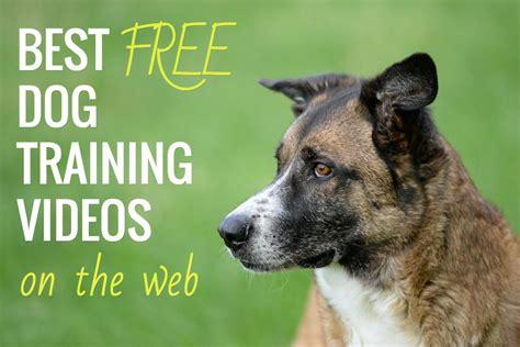 free dog training videos online.aspx Image