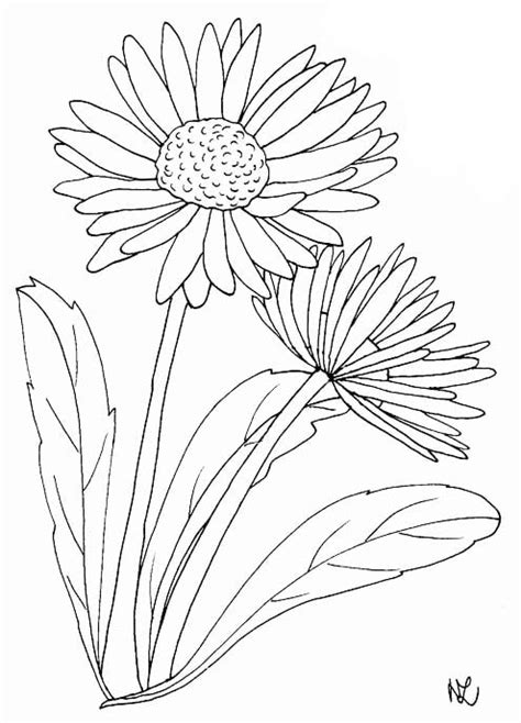 Gänseblümchen Malvorlage