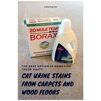 Get rid of cat urine stains & smell from your home right now! programs