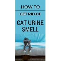 Get rid of cat urine stains & smell from your home right now! promo