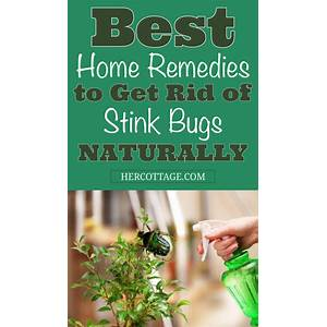 Get rid of stink bugs permanently stink bug infestation guide bonus