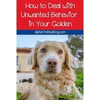 Golden retriever care and training free tutorials